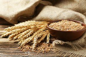 Chopin&C.: tutti i test che deve superare il grano per diventare pasta