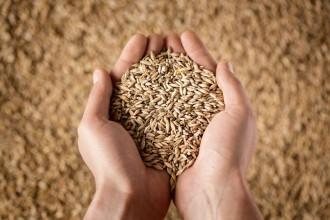 grano duro pasta_2
